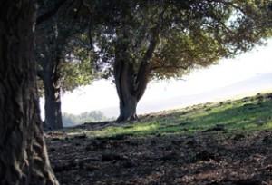 arriba-vista-trails2