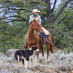 Rider and Dog